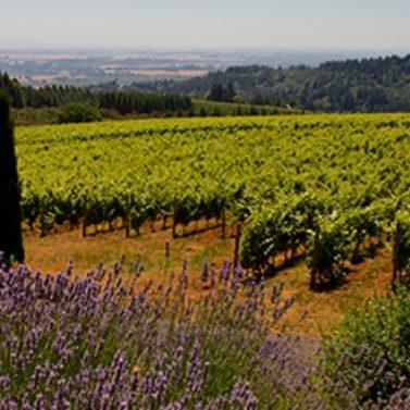 https://vintagetourbus.com/wp-content/uploads/2014/05/Willamette-lavender-1-377x377-1-377x377.jpg