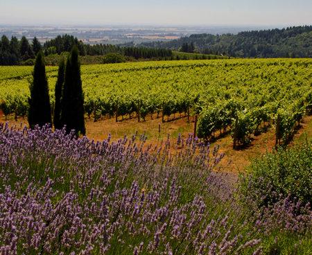 https://vintagetourbus.com/wp-content/uploads/2016/01/Willamette-lavender-1-450x368.jpg